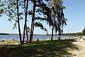 Piaseczno Lake - panoramio.jpg