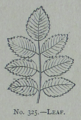 Picture Natural History - No 325 - Leaf.png