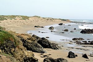 Hearst San Simeon State Park - Piedras Blancas State Marine Conservation Area and seal colony
