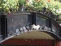 Pigeons' Umbrella - geograph.org.uk - 501182.jpg