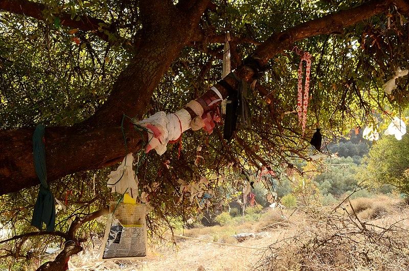 עץ האלה בקבר יונתן בן עוזיאל
