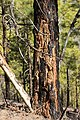 Pilancones Natural Park (MGK25598).jpg