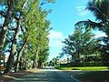 Pine Tree Drive Miami Beach - John S Collins 05.jpg