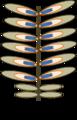 Pinus weiblicher Blütenzapfen.png
