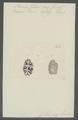 Planaria zebra - - Print - Iconographia Zoologica - Special Collections University of Amsterdam - UBAINV0274 105 09 0003.tif