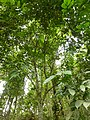 Plants at Queen Sirikit Botanic Garden - Chiang Mai 2013 2689.jpg