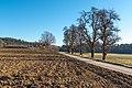 Poggersdorf Linsenberg Landschaft mit Birnbäumen 11012019 5938.jpg