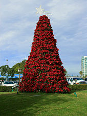 poinsettia flowers arranged into the conical shape of a christmas tree topped with a star of bethlehem in san diego 2005 - Origin Of Christmas Tree