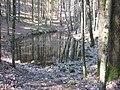 Pokaiņu mežs - panoramio.jpg