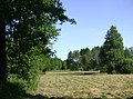 Poland. Gmina Jedwabno. Forests 015.JPG