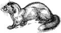 Polecat (PSF).png