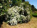 Poltava Botanical garden (122).jpg