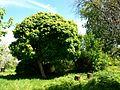Poltava Botanical garden (94).jpg