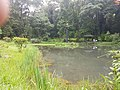 Pond View 20170706 160149 001.jpg