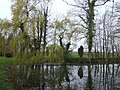 Pond and willow - geograph.org.uk - 398477.jpg
