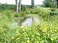 Pond by Furnacepond Farm - geograph.org.uk - 1363804.jpg