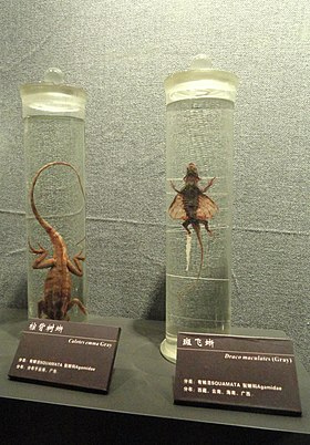Preserved specimens - Kunming Natural History Museum of Zoology - DSC02409.JPG
