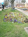 Pretty flowerbed within Chichester Canal basin - geograph.org.uk - 758529.jpg