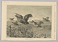 "Print, Partridge, illustrated in ""Every Saturday,"" October 1, 1870, 1870 (CH 18439989).jpg"