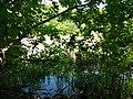 Psilskyi Landscape Reserve (05.05.19) 08.jpg