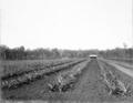 Queensland State Archives 2621 Training farm Beerburrum October 1918.png