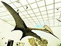 Quetzalcoatlus northropi model.jpg