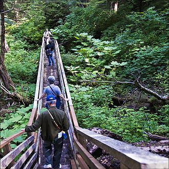 Tongass National Forest - A forest path in the Tongass National Forest