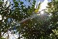 Rancho Español 32000, Dominican Republic - panoramio (34).jpg