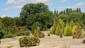 Real Jardín Botánico Juan Carlos I (RPS 07-06-2014) arboreto Ibérico.png