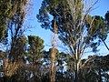 Real Parque del Buen Retiro (2807400732).jpg