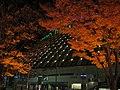 Red trees around (65033843).jpg