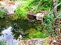 Reflejos en el agua - panoramio.jpg