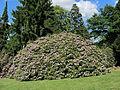 Rhododendronpark Kleine Bastei Rathen 5.JPG