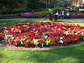 Richmond Terrace Gardens Sept 010a.jpg
