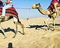 Ride camel.jpg