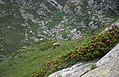 Rifugio Jervis Ceresole Reale 2.jpg