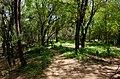 Rio Piauí - Bosque de Algarobas 02.JPG