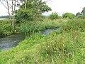 River Axe near Axe Bridge - geograph.org.uk - 1379246.jpg