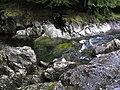 River Coe nr. Glencoe village. - panoramio.jpg