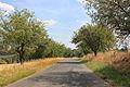 Road from Předenice to Netunice.jpg