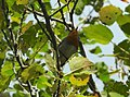 Robin (27984134005).jpg