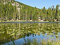 Rocky Mountain NP, Nymph Lake - panoramio.jpg