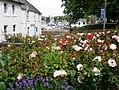 Rose garden at Castle Bank, Kirkcudbright.jpg