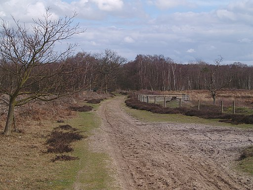Roydon Common National Nature Reserve - geograph.org.uk - 1807333
