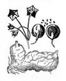 Roze fig.34 à 38.png