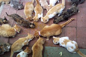 Dinner time for the feral cats who live in my ...