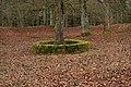 Ruine Konzenberg-2960.jpg