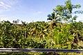Samaná Province, Dominican Republic - panoramio (49).jpg