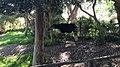 San Diego Zoo Safari Park 8 2014-08-29.JPG