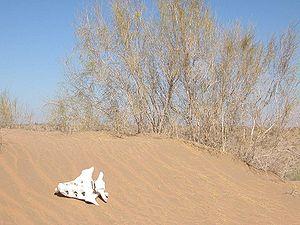 Kyzylkum Desert - Image: Sand dune